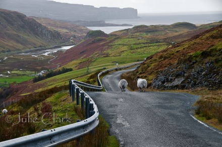 Isle of Skye Traffic
